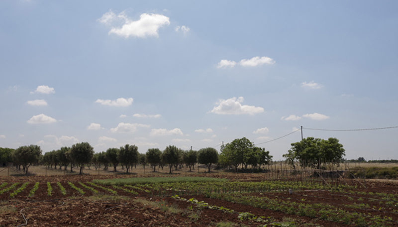 Terreno azienda agricola