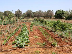 azienda agricola - orto